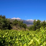 Dourakis Winery - Crete