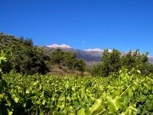 (c) Dourakis Winery - Crete
