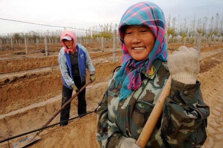 Les ouvrières du Château Hansen enterrent les vignes dans le sable afin d'éviter les rudes gelées hivernales. Désert de Gobi, Mongolie intérieure.