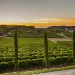 Kabola - Weingärten