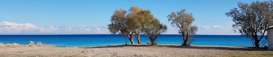 cropped-Strand-mit-Bäumen.jpg