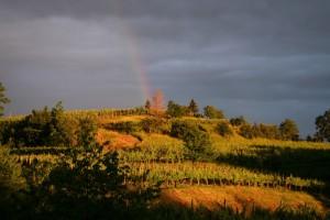 Blick von der Terrasse des Atelier Kramarauf das Weinbaugebiet Brda