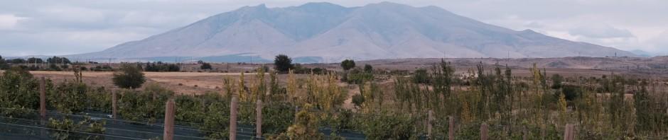 Weingärten des Weingut Van Ardi in der Provinz Aragazotn - (c) Van Ardi