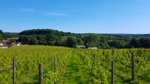 Lage Millenium und Weingut ©Sedlescombe Organic Vineyard